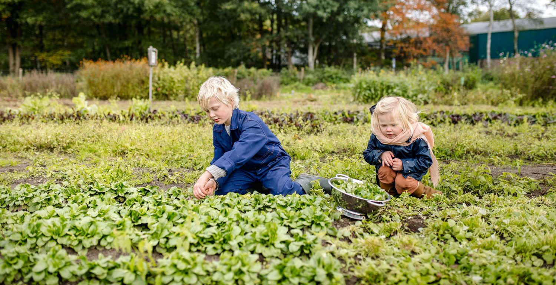 kinderen-plukken-groenten