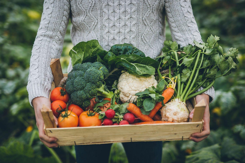 krat vol verse groenten