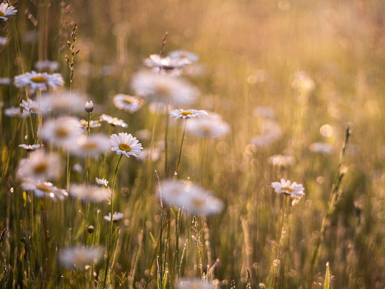 bloemen-in-weide